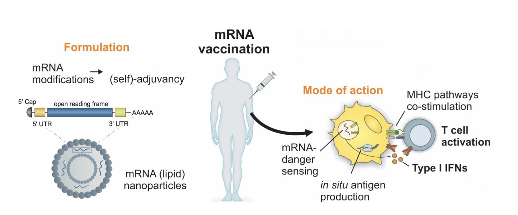 mRNA vaccination platform_ip2