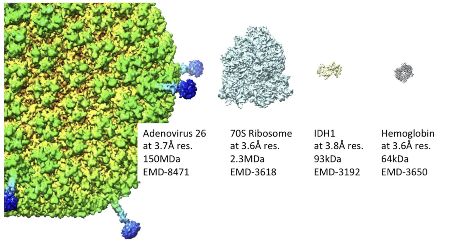 Representative bio-molecules solved by cryo-EM at near-atomic resolution