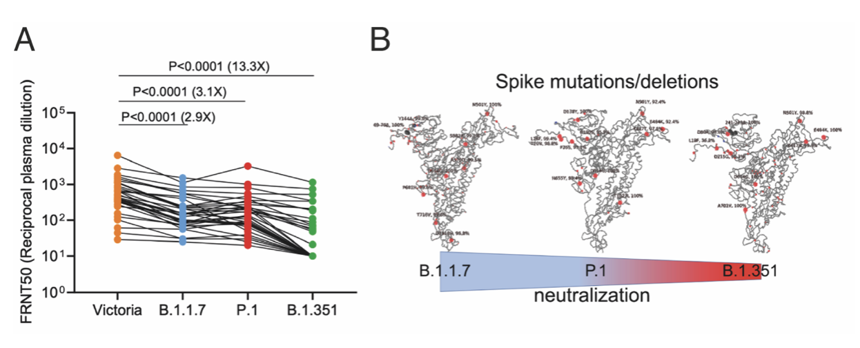 AlphaFold predicts protein structures with high accuracy